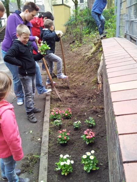 Im Schulvorgarten werden Blumen gepfanzt