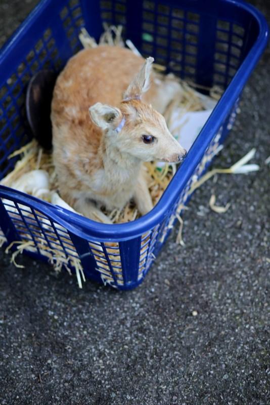 Schulfest: Ausgestopfte Tiere,  Waldschule